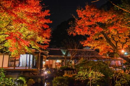 紅葉が見頃の庭園ライトアップ