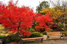 キャンパス内の庭園で楽しめた紅葉