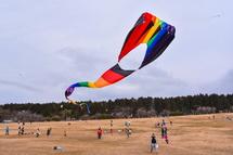 さまざまな凧が空を舞う
