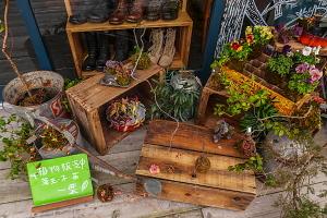 屋外に並ぶ一葉のグリーン雑貨