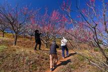 梅の花を楽しむ人々