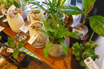 植物の販売
