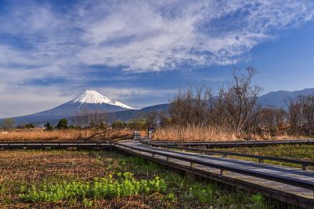 浮島ヶ原自然公園 湿原と富士山の風景