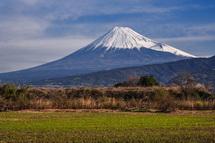 芽吹く湿原と富士山の風景
