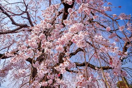 目の前で咲き誇る花を楽しむ