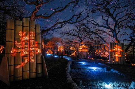 幻想的な梅園と竹灯籠の風景