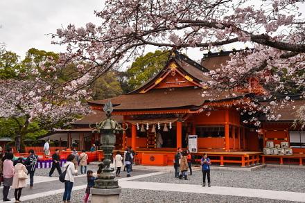 4月2日現在の桜開花状況 富士山本宮浅間大社