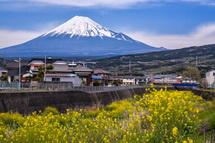 菜の花と富士山に加えて岳南電車も見れた