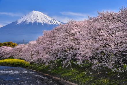 「桜×富士山」を楽しめる潤井川龍巌淵