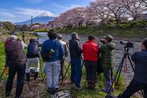 桜と富士山の風景を撮影するカメラマンたち