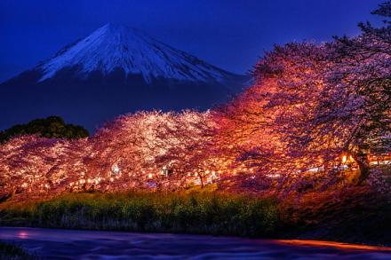 龍巌淵の夜桜と富士山の風景