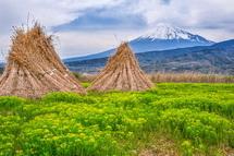 刈り取った葦や富士山とのコラボが絵になる風景