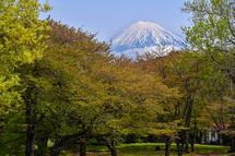 ほぼ葉桜になった岩本山公園(4月16日)