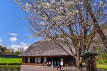 旧稲垣家住宅と開花した桜