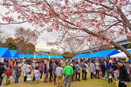 鷹岡地区さくら祭り開催で賑わう富士西公園