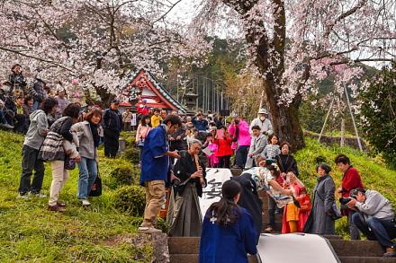 桜が見頃で賑わう興徳寺「花まつり」