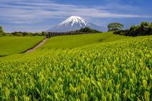 今宮からの茶畑と富士山の風景
