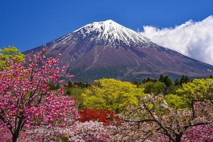 朝霧霊園の八重桜と富士山の風景