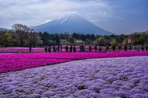 芝桜と富士山を楽しむ人々