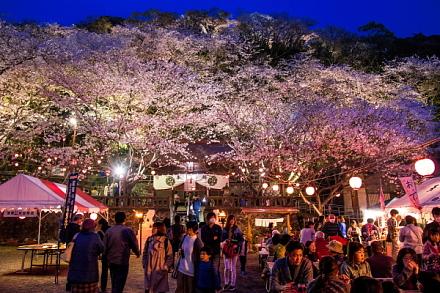 賑わう御殿山の夜桜
