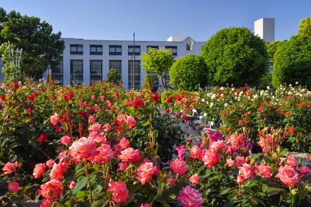 中央公園のバラとロゼシアターの風景