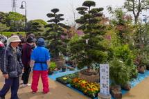 花木の販売