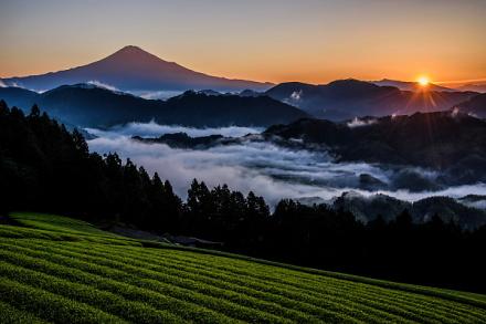 雨上がりの翌日に現れた雲海と富士山の風景
