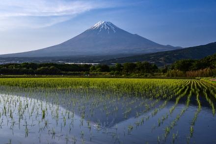 富士市東部の田んぼ逆さ富士