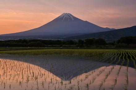 夕暮れ時の田んぼ逆さ富士