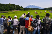 茶摘みする茶娘と富士山の風景を撮るカメラマンたち