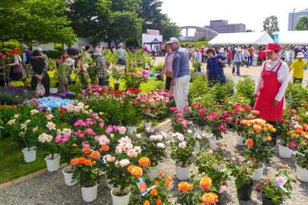 多くの来場者で賑わう富士ばらまつり会場