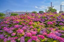 一面のお花畑のような景観