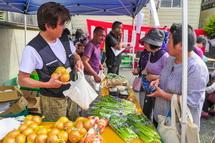 大人気の新鮮野菜販売