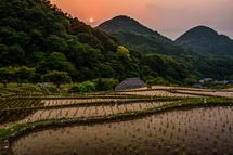 夕陽が沈む頃の棚田の風景