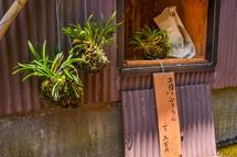 植物の無人販売も