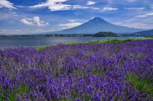 ラベンダー畑と富士山の素敵な風景