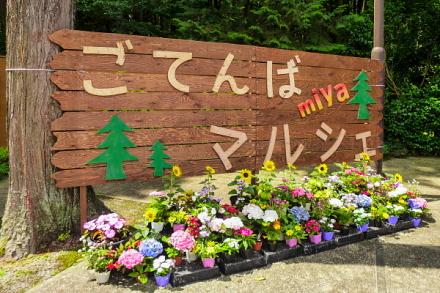 ごてんばmiyaマルシェ開催の秩父宮記念公園