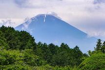 園内から見る富士山