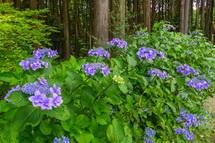 あじさいなど季節の花が彩る園内
