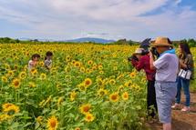 ひまわり畑で記念撮影