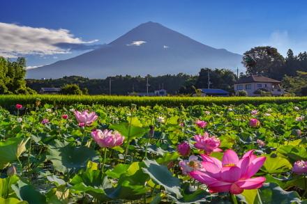 富士宮の里山にある蓮田