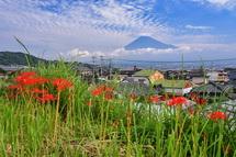 咲き始めた彼岸花と富士山