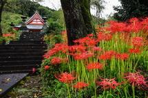 興徳寺に咲く彼岸花