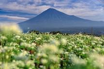 咲き誇るそばの花と富士山