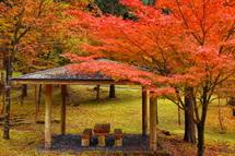 紅葉した木々と東屋