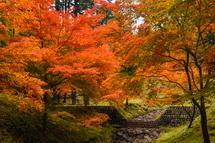 綺麗に色づいた木々