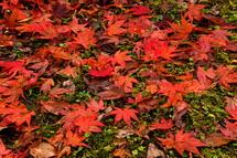 地面に落ちた葉も綺麗