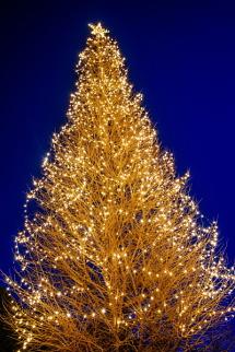 電球の灯りで彩られた峠のツリー