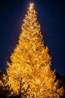 黄葉が残った状態でのツリーの美しいイルミネーション