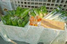 新鮮野菜が並ぶ